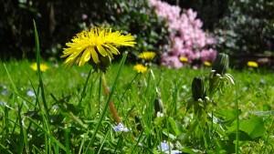 meadow-43467_640